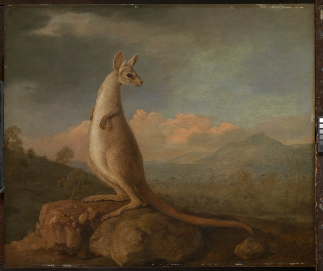 The Kongouro from New Holland (Kangaroo) 1772 by George Stubbs. ZBA5754